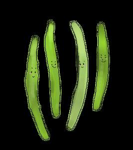 Local Organic Bean