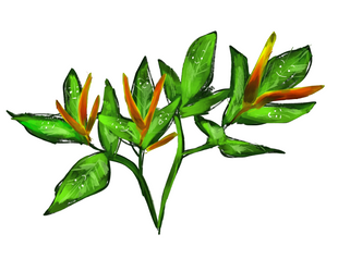 Local Organic Chilli Leaves