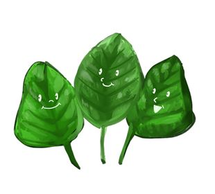 Local Organic Ceylon spinach