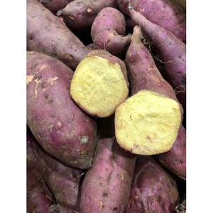 Local Organic Japanese Sweet Potato