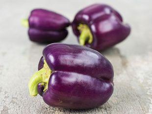 Local Organic Lilac Bell Pepper