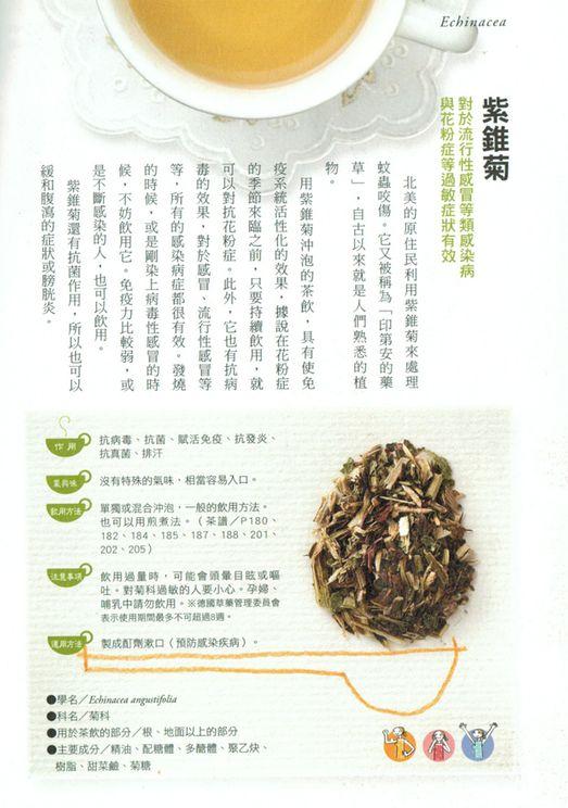 當薰衣草遇上紫錐花 有機花茶 (Lavender Echinacea Tea)