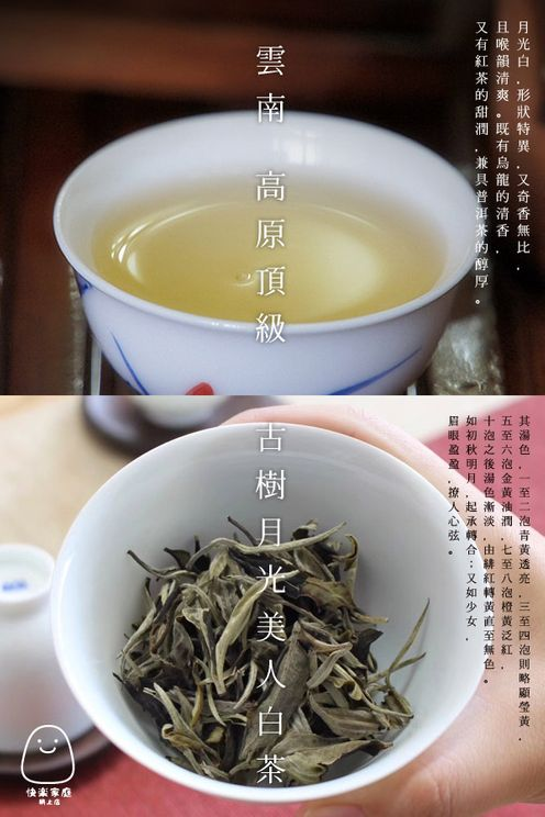 雲南最頂級 高原手採 月光美人白茶